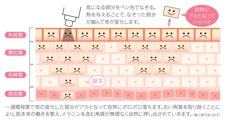 スキンチェンジャー1509_パンフA3折B